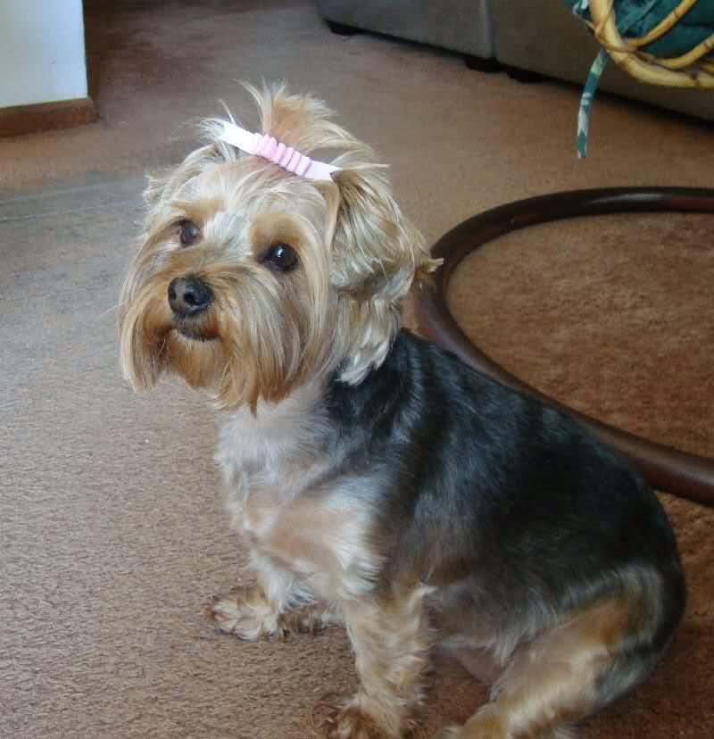 Dog Hair style 1