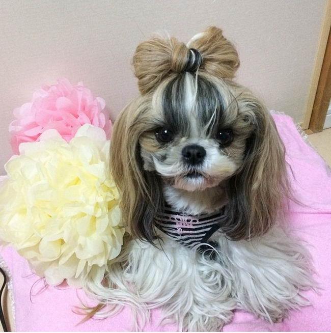 Dog Hair style 15