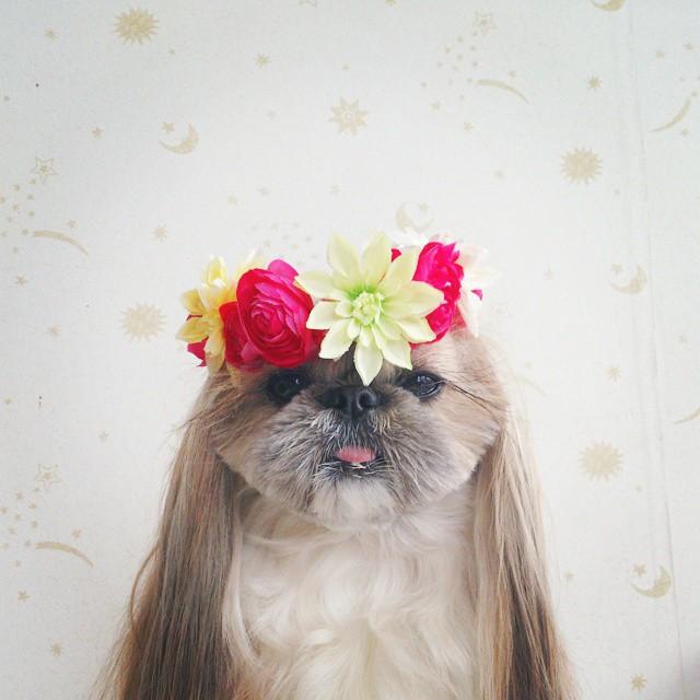 Dog hair style 29