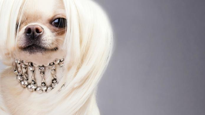 Dog hair style 27