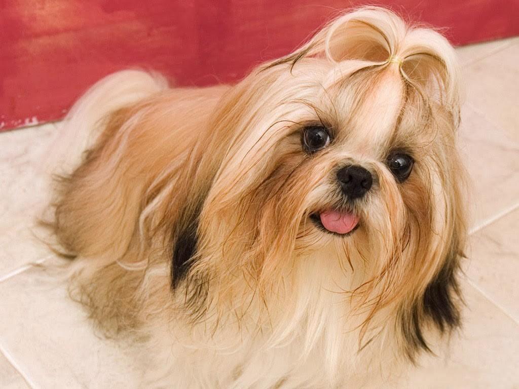 Dog hair style 7