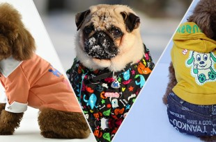 Dog Winter Fashion Trends