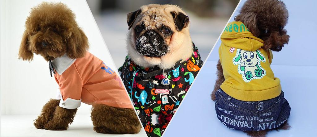 Dog Winter Fashion Trends