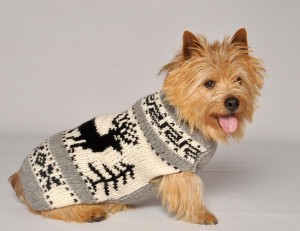 Dogs winter fashion wear