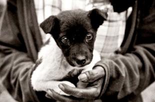 Gobi Gray The Stray Dog