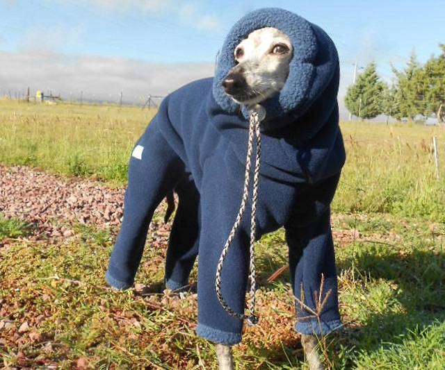 Winter Fashion Trends For Your Pet Dog Dogexpress