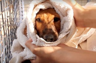 Drowning Puppy Rescued in India