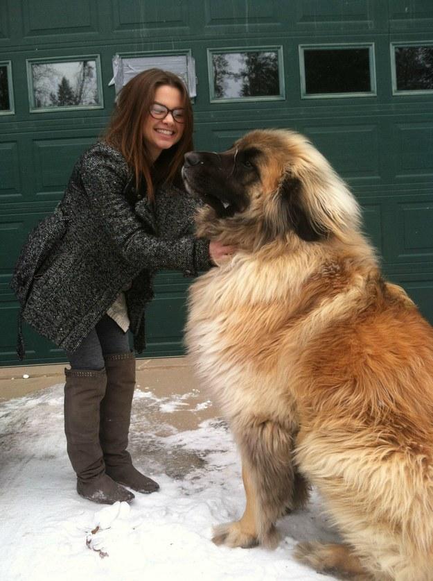 HUGE DOG1
