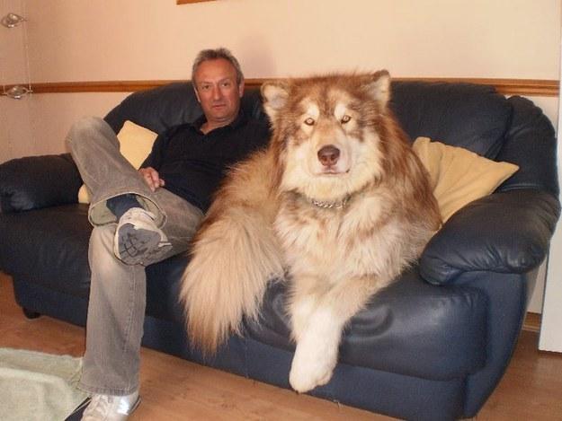HUGE DOG3