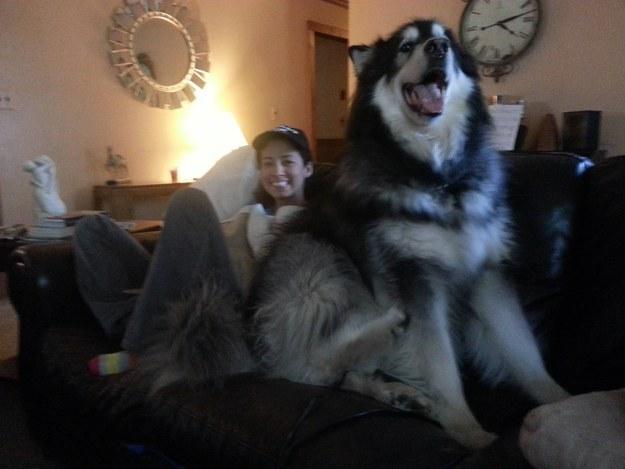 HUGE DOG4