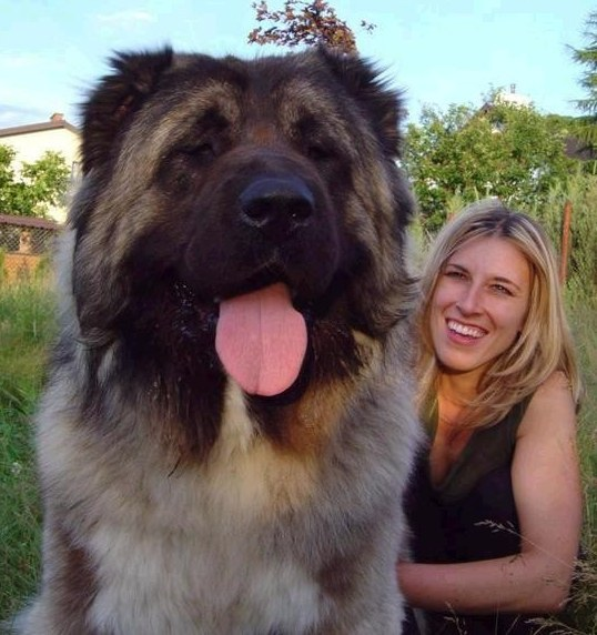 HUGE DOG7