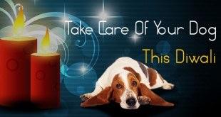 Dog Lifestyle