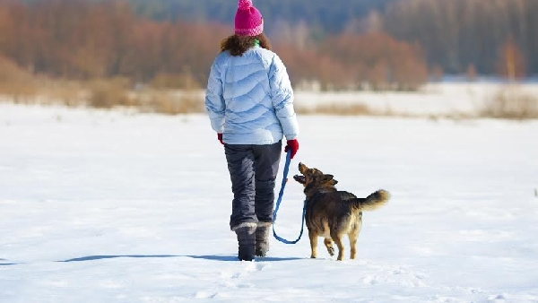 dog-walk-winter