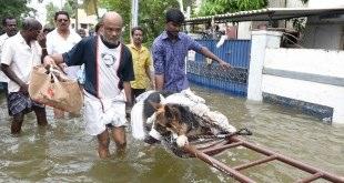 Dog News Stories India