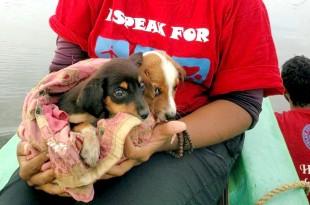 Dog News Story Website India