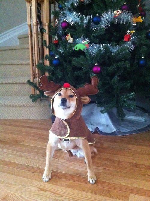 Christmas-dog-1