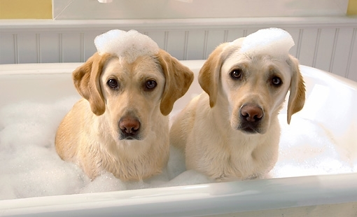 Dog bathing-dogexpress