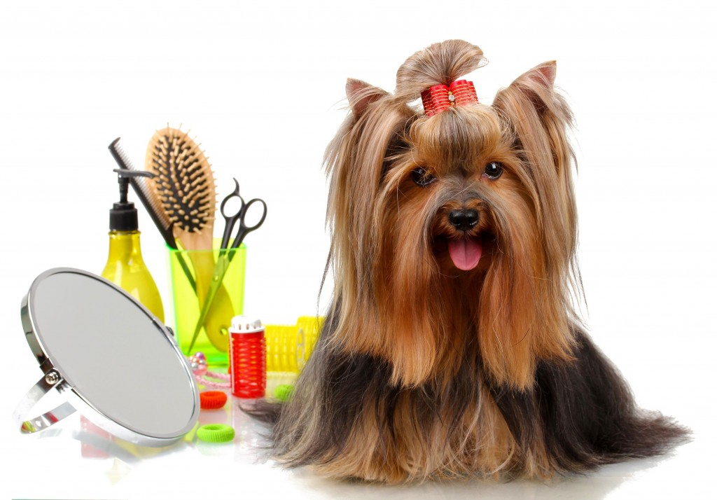 Dog grooming No.1