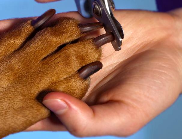 Dog grooming No.3