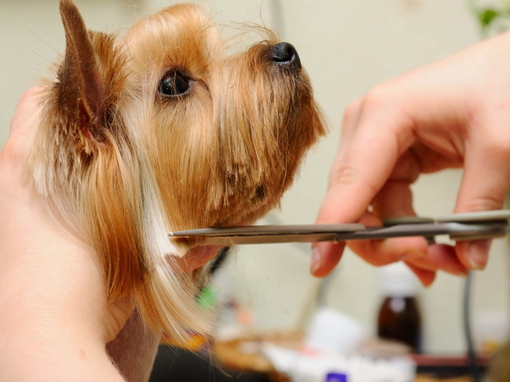 excessive shedding in dogs