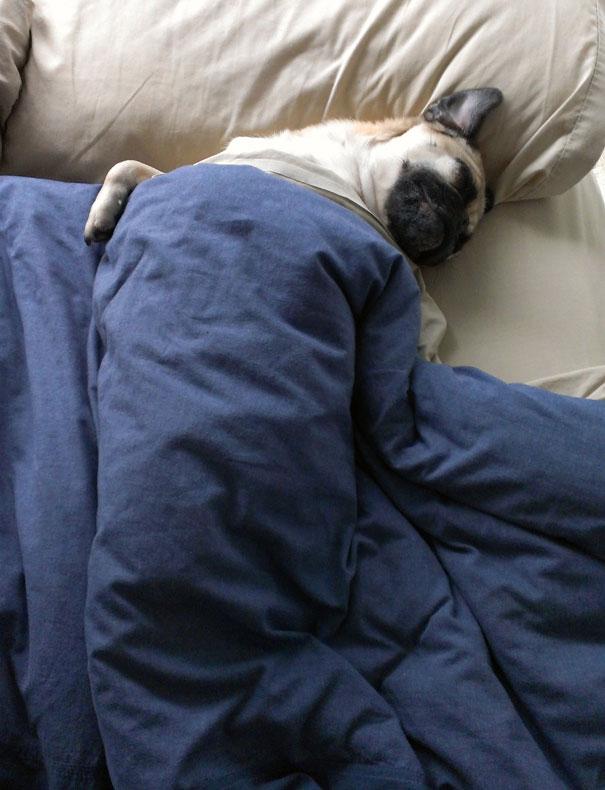 Sleeping Dog no.1