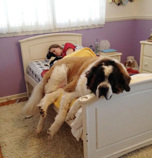 Sleeping Dog no.10