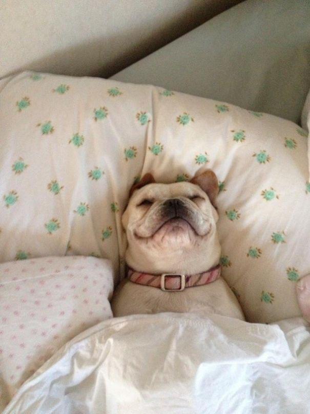 Sleeping Dog no.11