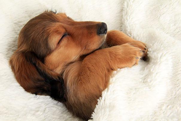 Sleeping Dog no.13