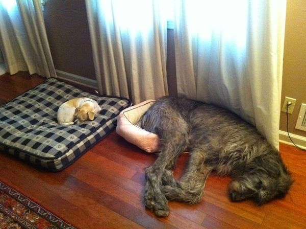 Sleeping Dog no.27
