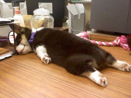 Sleeping Dog no.29