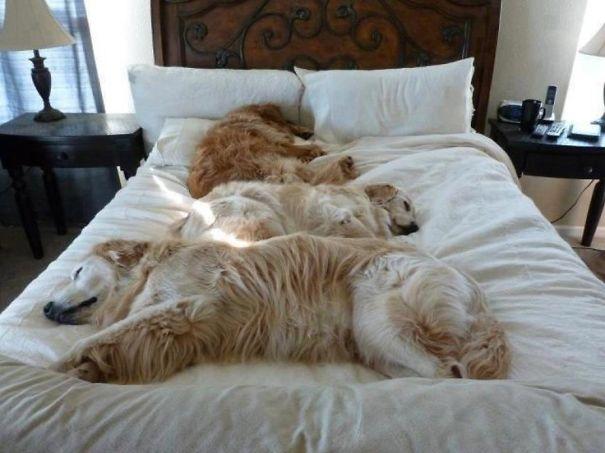 Sleeping Dog no.5