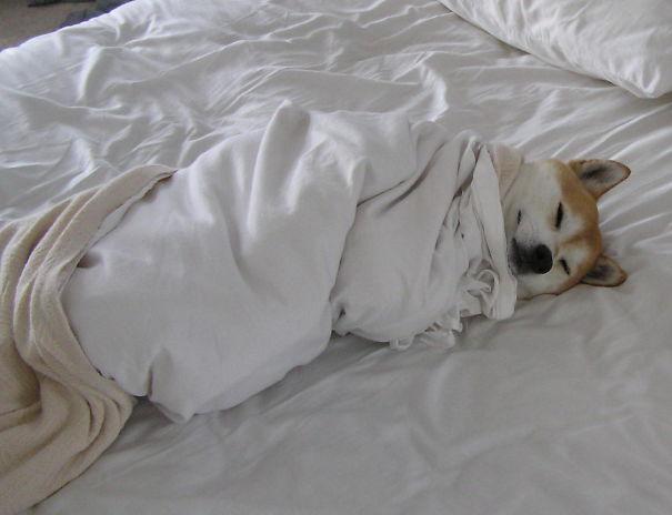Sleeping Dog no.7