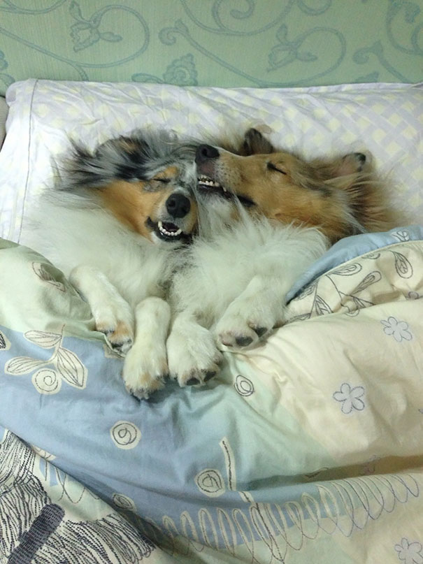 Sleeping Dog no.8