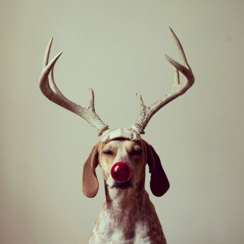 christmas-dogs-13