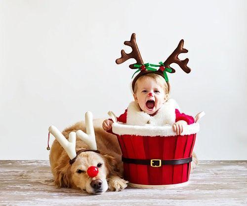 christmas-dogs-16