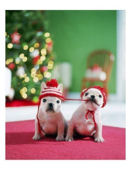 christmas-dogs-18