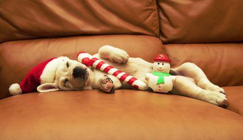 christmas-dogs-19