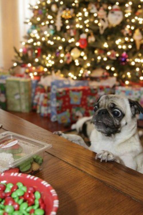 christmas-dogs-2