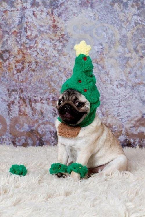 christmas-dogs-26