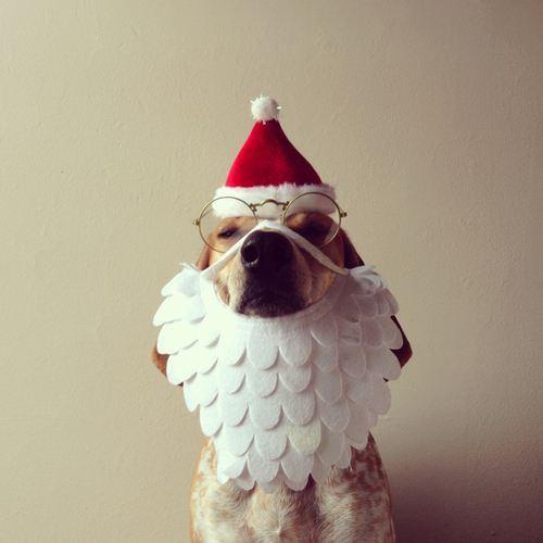 christmas-dogs-27