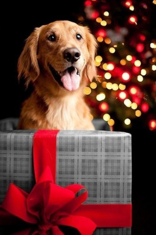 christmas-dogs-28