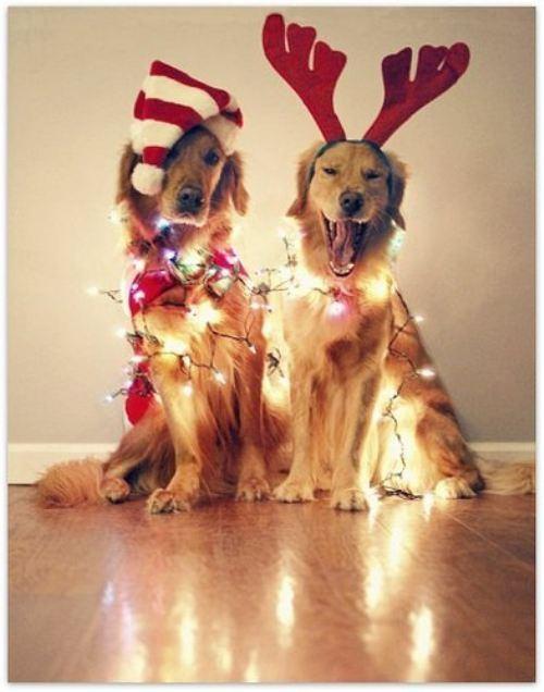 christmas-dogs-29