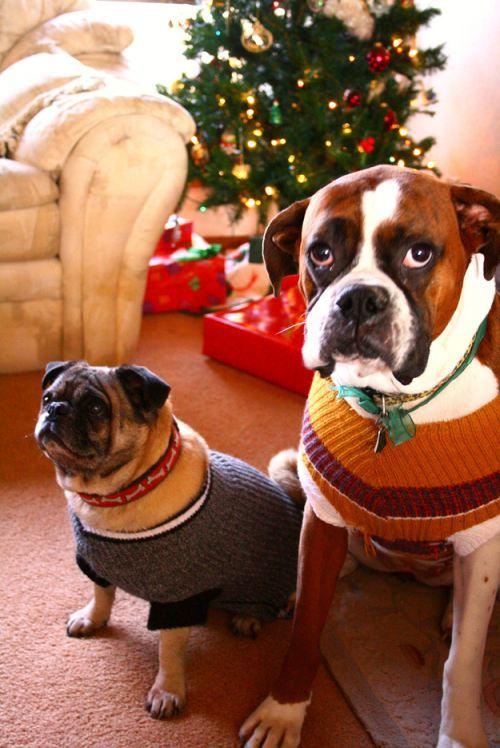 christmas-dogs-3