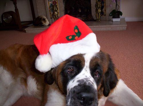 christmas-dogs-6