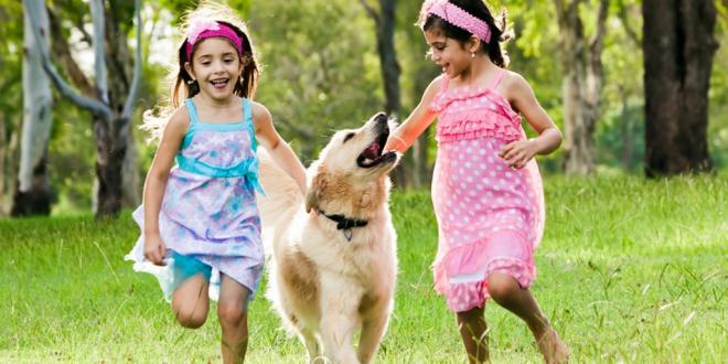 Reasons to Keep a Pet Dog