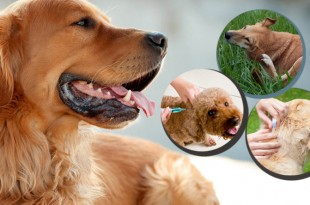 Dog Skin Care Articles