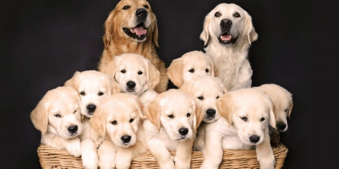 Dog Breeds with Price & Pictures   Best Dog Breed