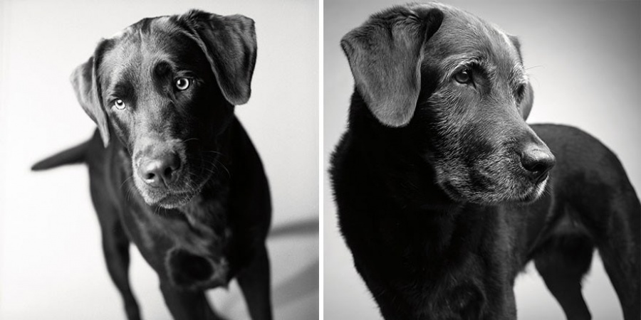 Corbet-2 years and 11 years