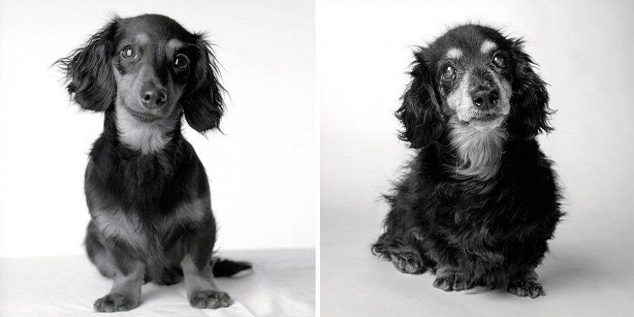 Lily-8 months and 15 years