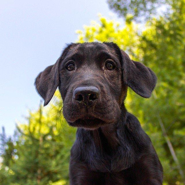 Dog QuestionNo.10